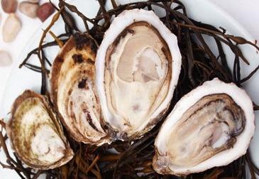 Montauk Pearls